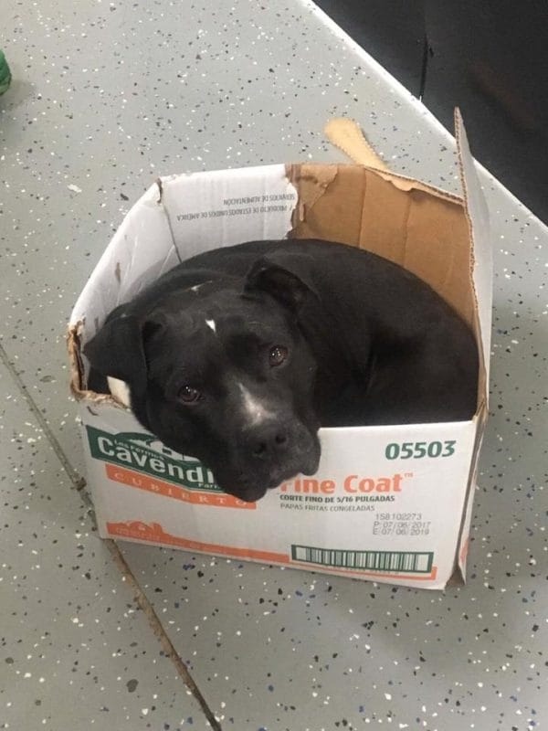 rescue dog sleeps in box