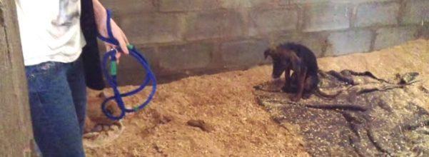 amazing animal dog rescue simba tick