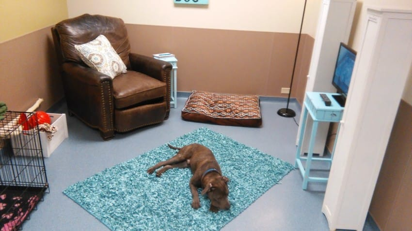 animal shelter creates living room for dogs