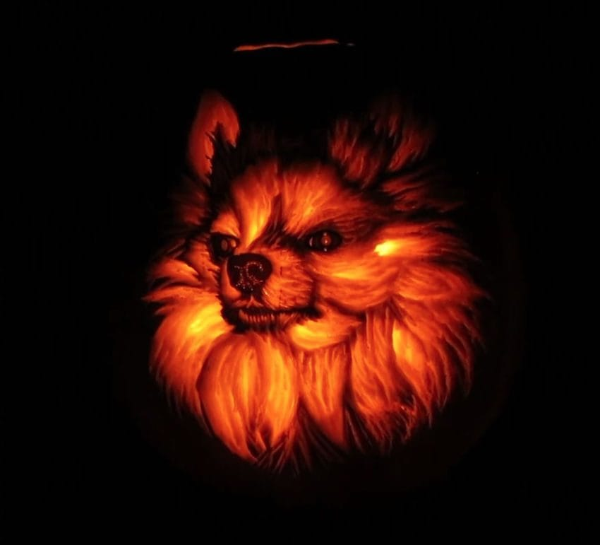 dog pumpkin andy manoloff