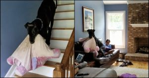 great dane unicorn pillow