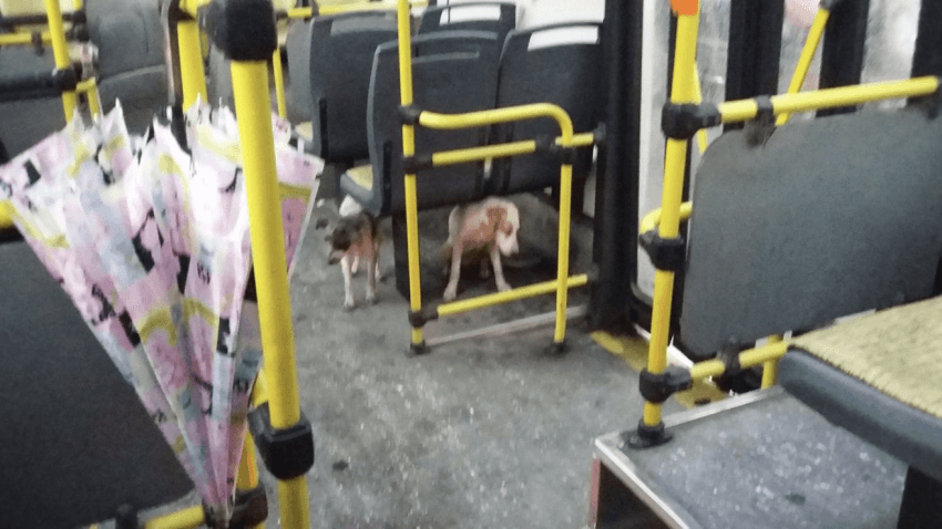 bus driver welcomes dogs