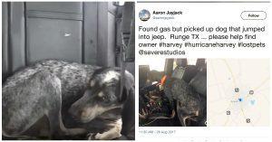hurricane harvey dog rescue