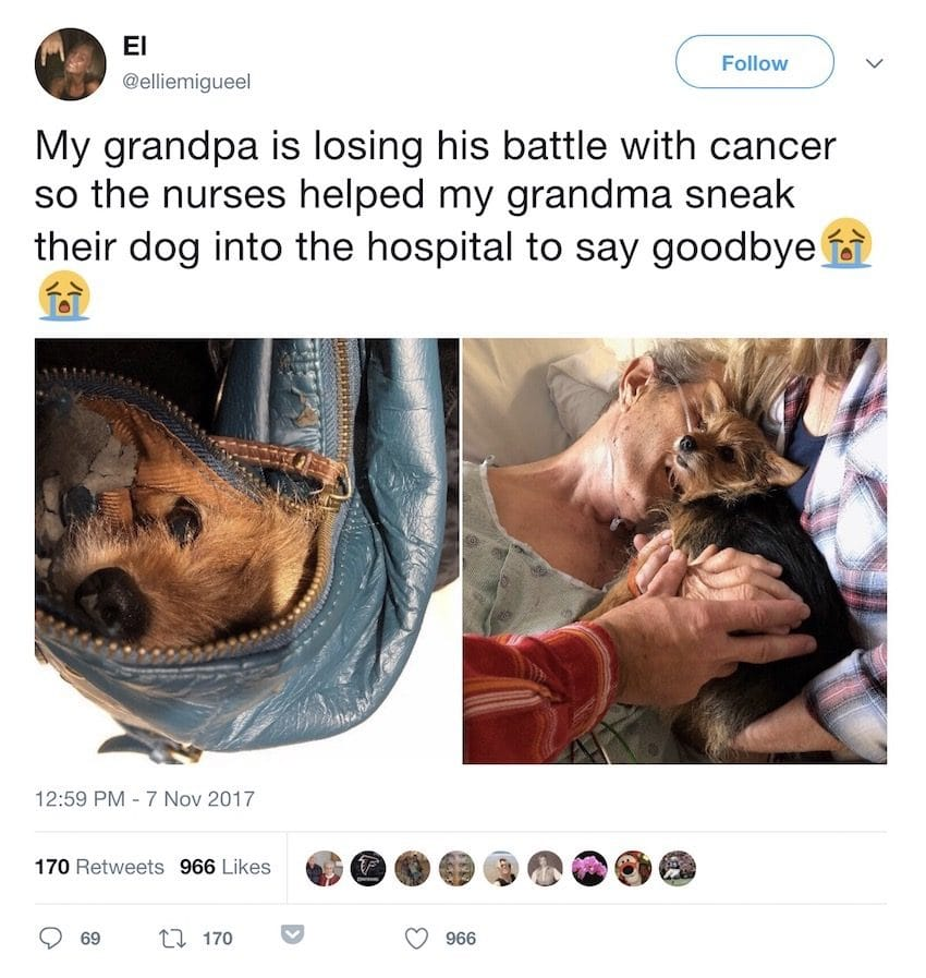 nurses help sneak dog into hospital