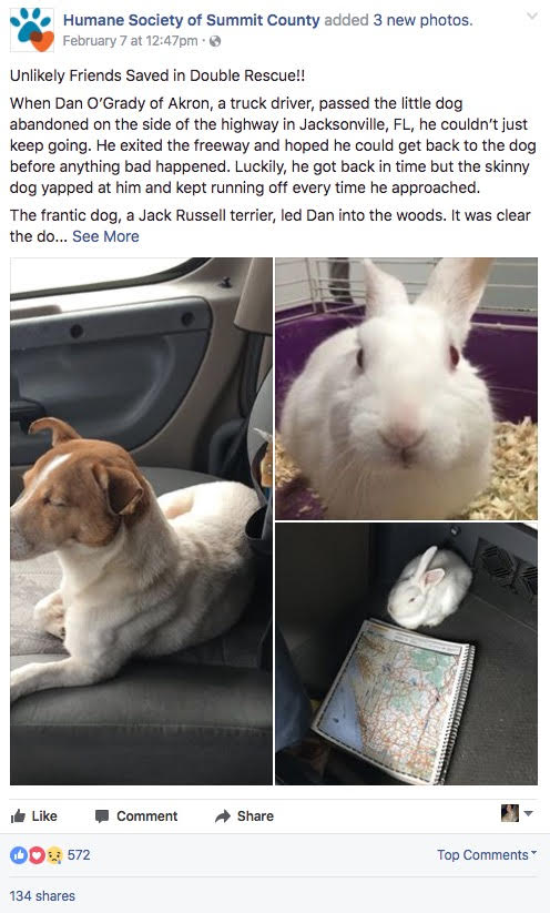 truck driver saves dog and rabbit