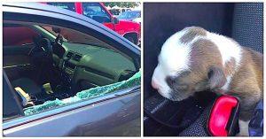 pensacola police puppy