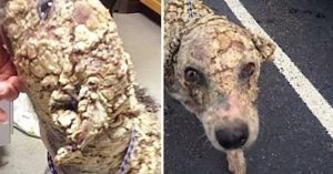 augustus dog transformation