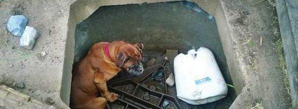cara rescues bella