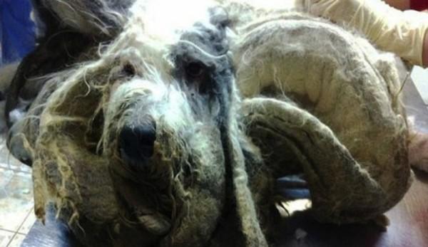 cocos dog transformation