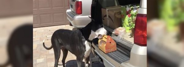 dog delivers fried chicken