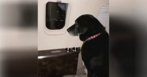 dog saved by heiress