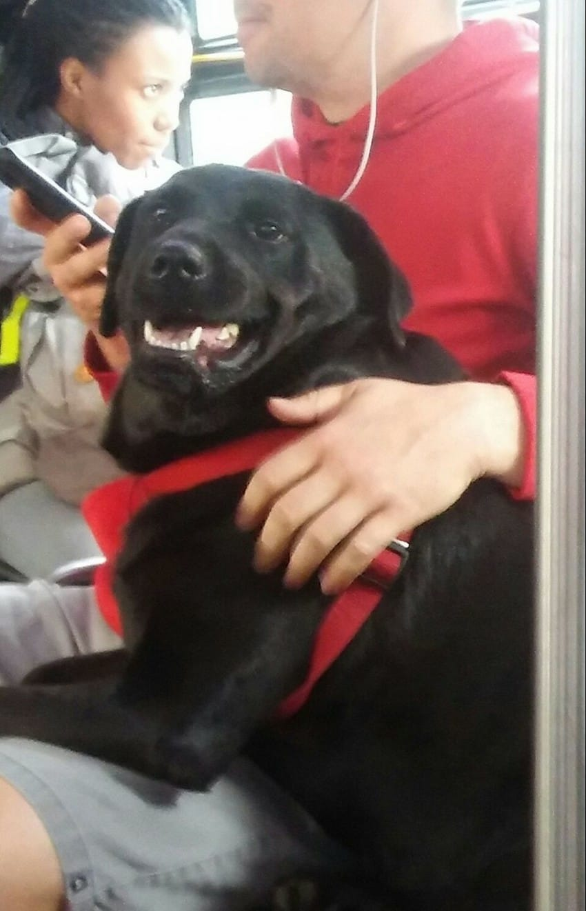 eclipse the dog riding bus