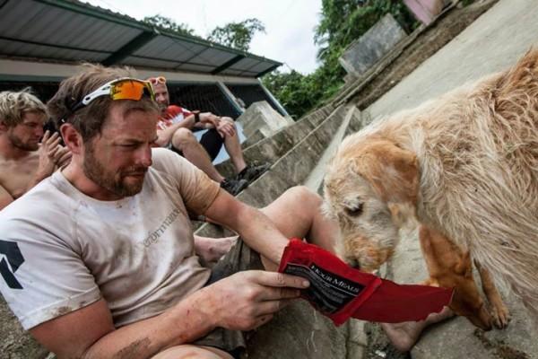 stray dog joins team