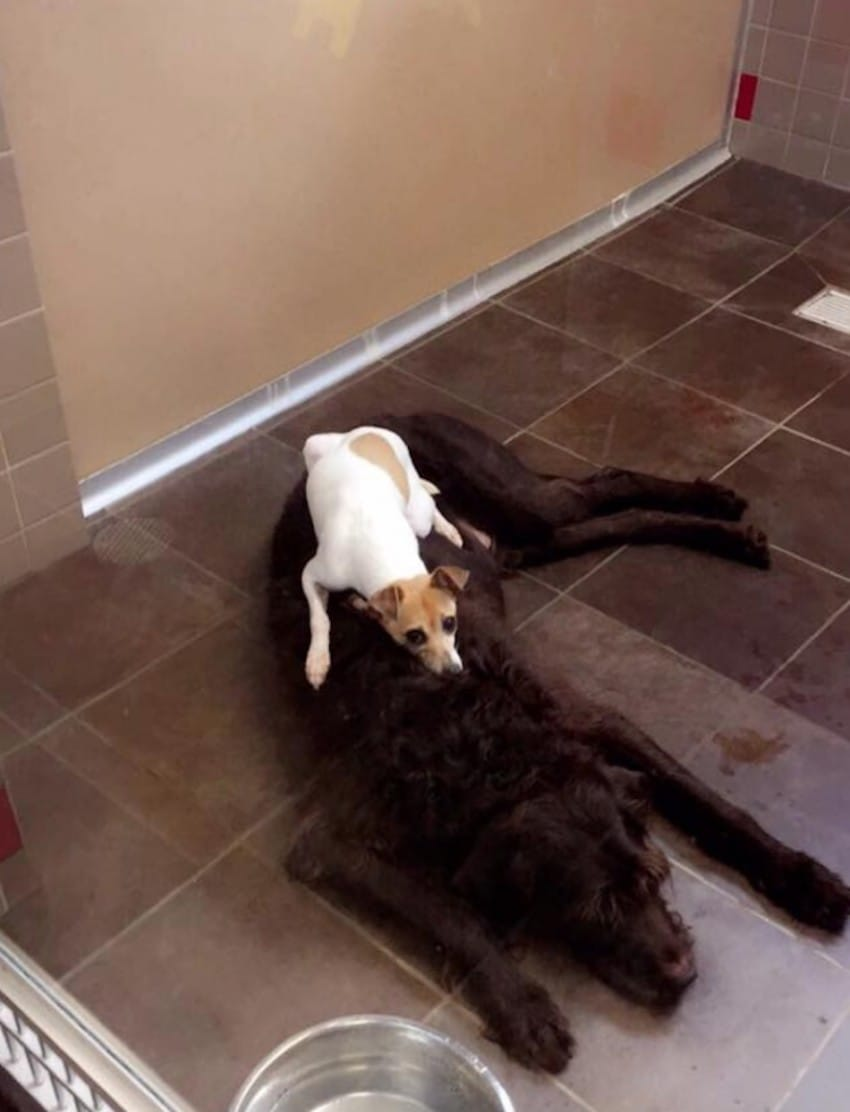 cuddling dogs adopted together
