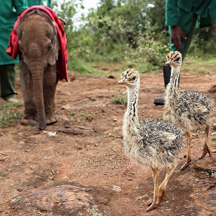 ostrich elephant cuddles
