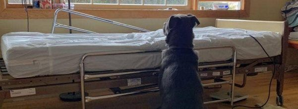 dog hospital bed dead owner