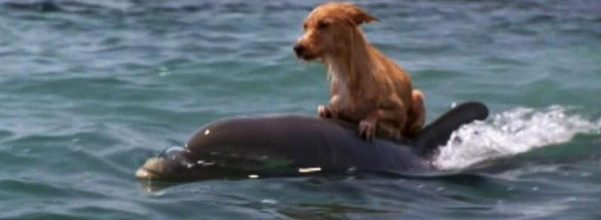 dolphins save dog