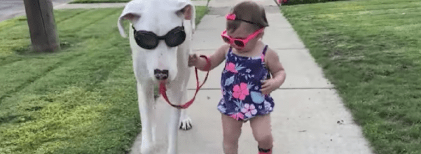 little girl with disabled dog