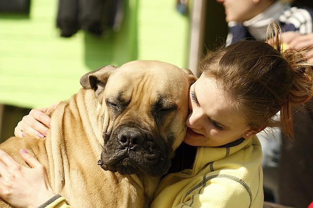 people like dogs vs human