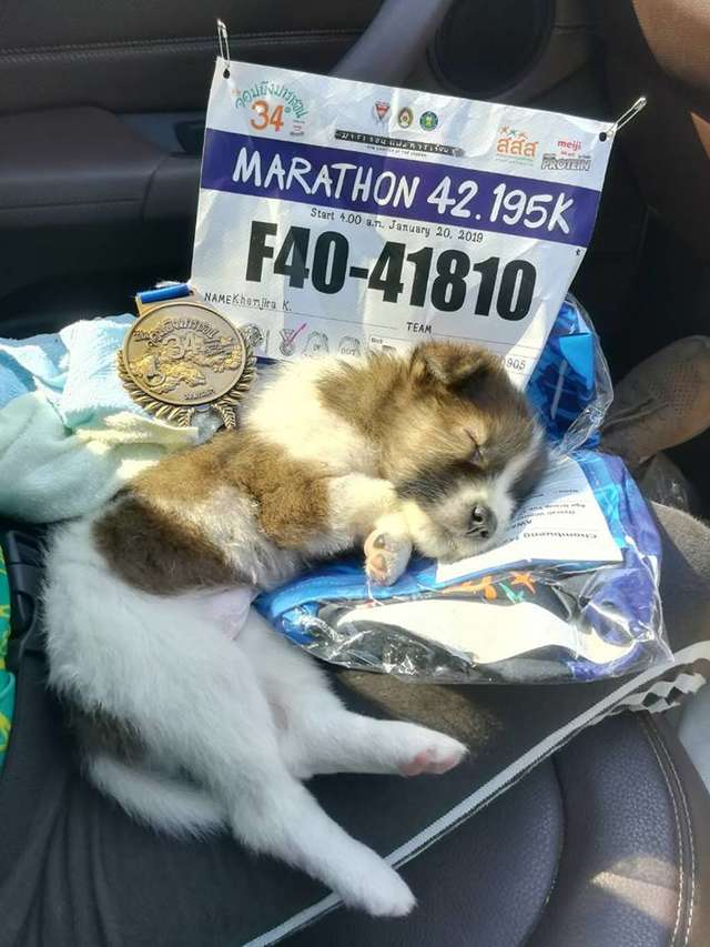 race runner rescues puppy