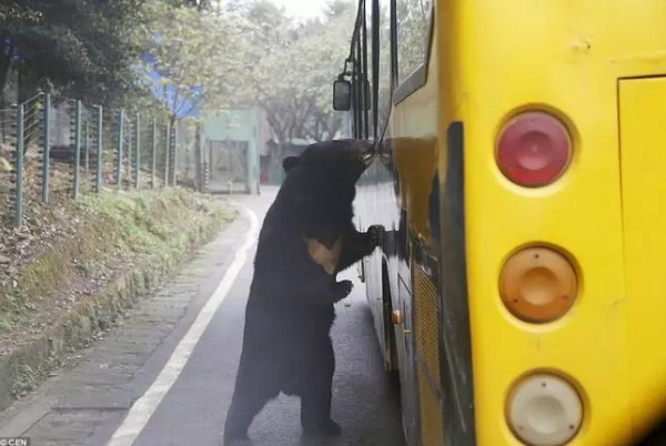 reverse zoo in china