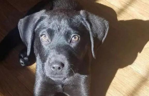 deaf man adopts deaf puppy