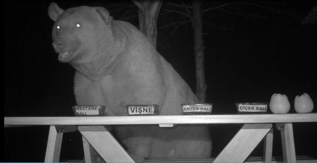 bears stealing honey