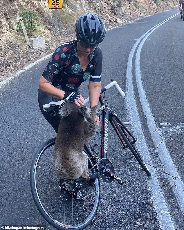 thirsty koala Australia
