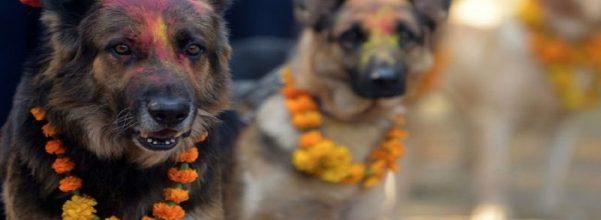 Nepal dogs festival