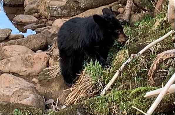 man saves bear cub