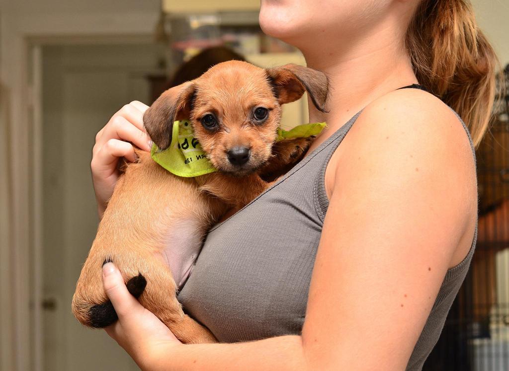 california pet adoption