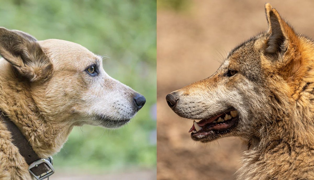 can dogs eat chicken bones