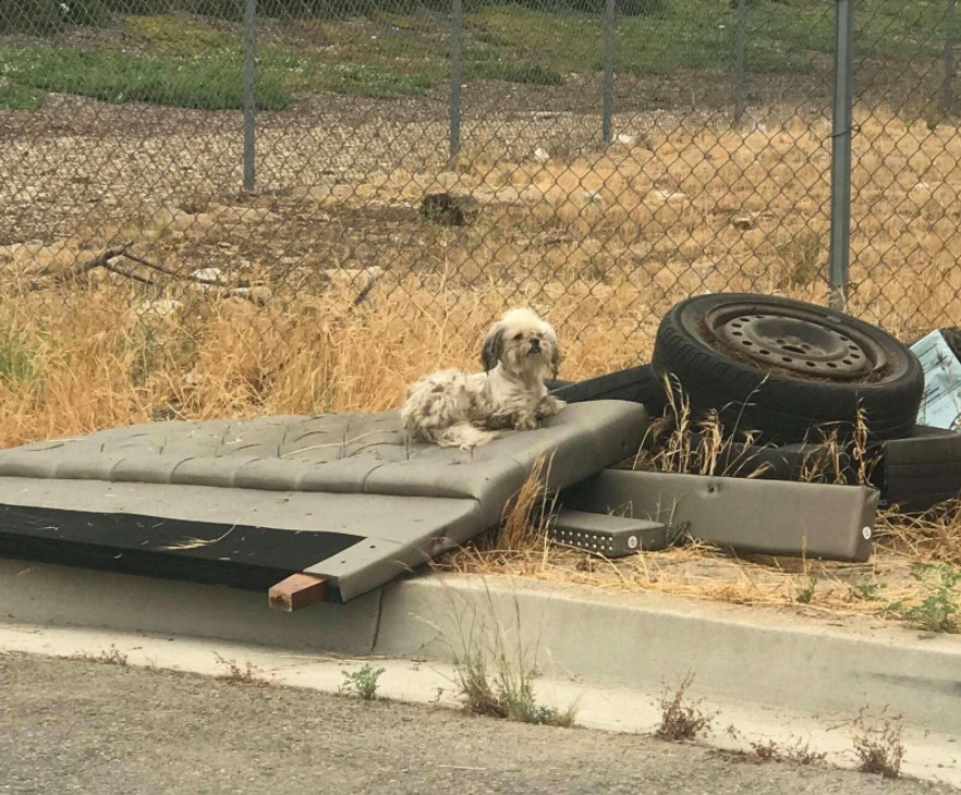 abandoned dogs live inside an old tire